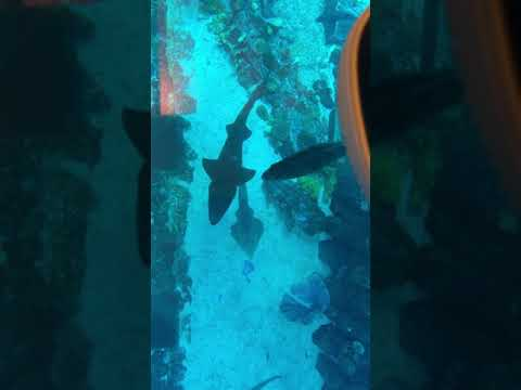 Dubai Mall – Aquarium Under Water Fish Zoo & The lost chambers at Atlantis The Palm 🦈🐊🐟🐠🐡🦀