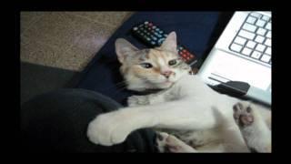 gato ronroneando rom rom.mpg