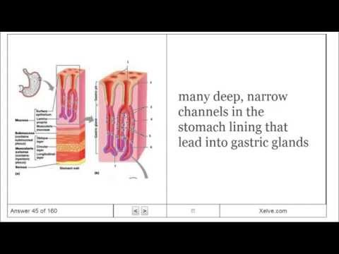 Introduction to Human Anatomy and Physiology - 14 The Digestive System and Body Metabolism
