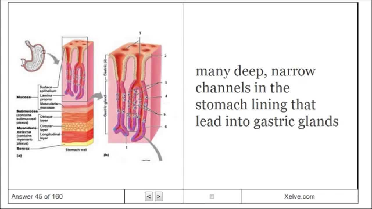Introduction to Human Anatomy and Physiology - 14 The Digestive ...