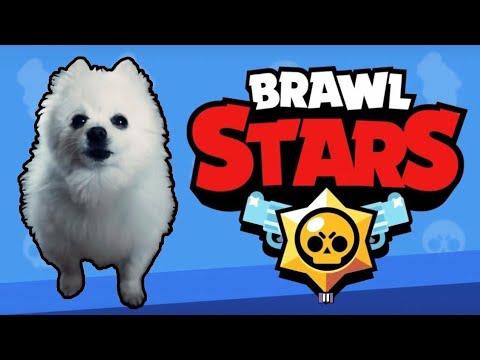 Собака поет (лает) музыку Brawl Stars | Собака исполняет музыку из Brawl Stars