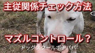 施設工事のご報告 主従関係チェック方法 ◼◻◼◻◼◻◼◻◼◻◼◻◼◻◼◻◼◻◼◻◼◻◼◻ 犬の...