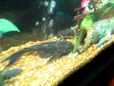 Best fish tank in the world youtube for Best fishing in the world
