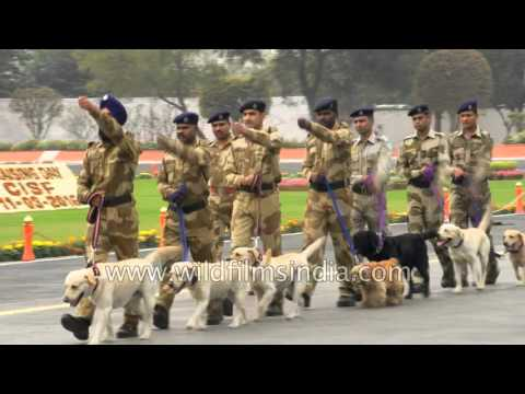 Indian security forces' dog squad at CISF Raising day - Delhi