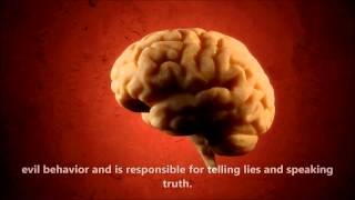 Quran explains the function of the Brain