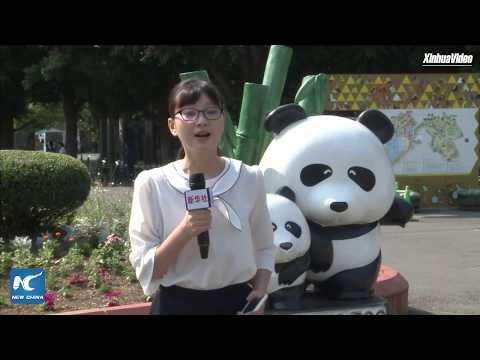 Cuddly envoys overseas: Giant pandas in Tokyo