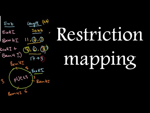 Restriction mapping tutorial 2 | restriction mapping problems for ...