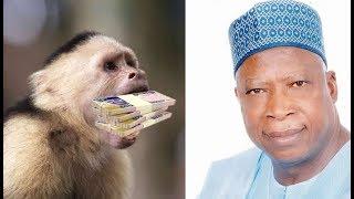 MONKEY SWALLOW 70 MILLION NAIRA IN NIGERIA AMEBO SEGMENT