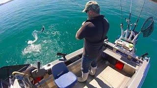 Wellington Boat Fishing - New Zealand Gurnard, fun in the sun...