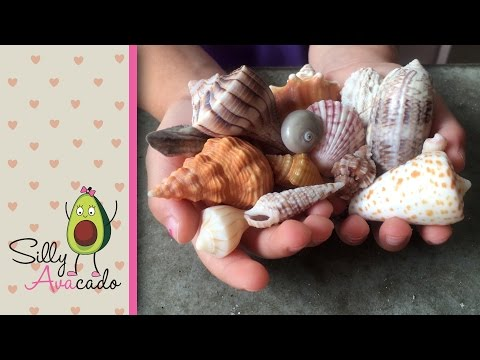 Collecting Seashells & Learning Shell Names at Sanibel Island, FL - Seashell capital of the world!