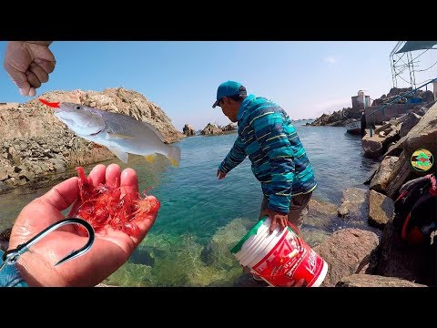 Nueva Carnada para los Pescadores Artesanales - Carnada para Todo los Peces
