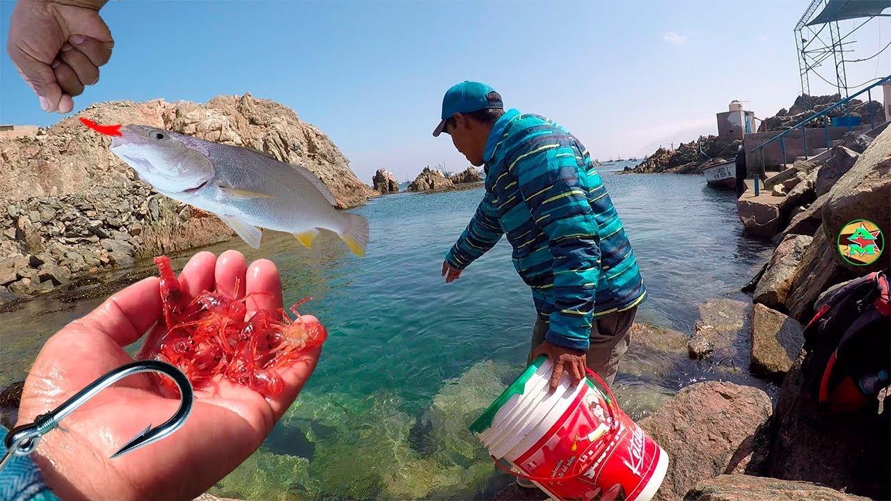 venta de carnada krill linear unit lima