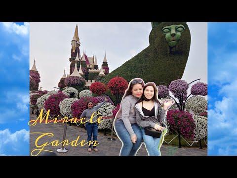 Miracle Garden 2020 (December 25)