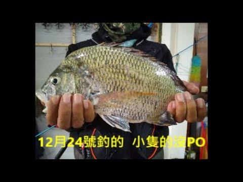 2019.12.24 【又是3斤級的大黑牛 ^^】30到50公分大黑牛-水深3尺以下(淺)前打目印八卦輪-老洋 Fishing - YouTube