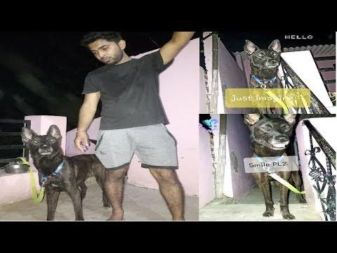 Basic Dog Training Tips | dog training tricks | Alternative words for come dog training