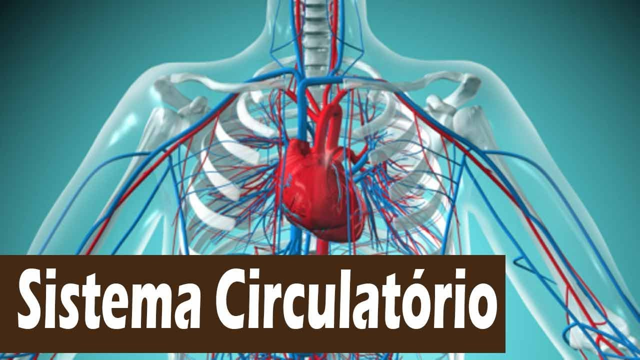 Do funções e suas sistema coração circulatório partes