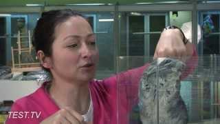 TEST.TV: Шиншилла - не только ценный нежный мех!