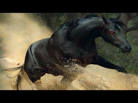أغرب 5 أحصنة في العالم لن تصدق انها موجودة حقا !!🙄