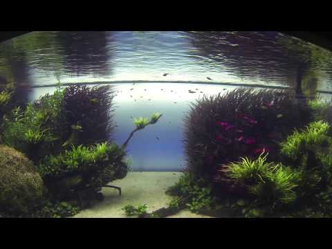 Forests Underwater by Takashi Amano - Lisbon Oceanarium