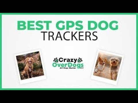Best GPS Dog Trackers For 2020 – No Monthly Subscription Included