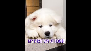 Puppies First Day at Home!