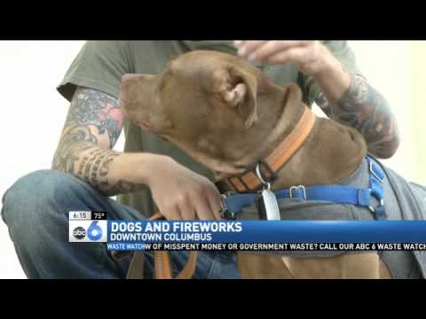 Dogs Fireworks And Thundershirts