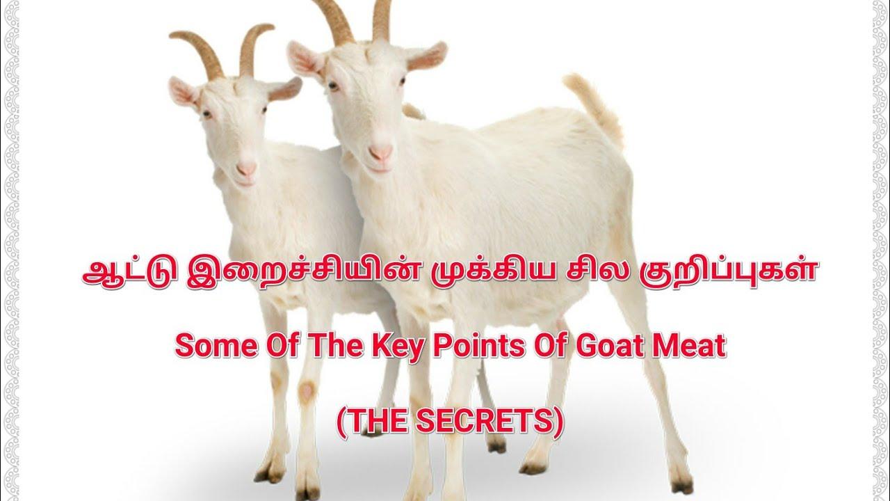 ஆட்டு இறைச்சியின் முக்கிய சில குறிப்புகள் - Some Of Key Points Of Goat Meat