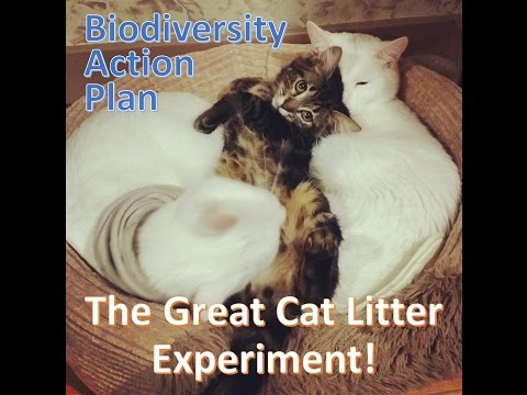 The Great Cat Litter Experiment || My Biodiversity Action Plan