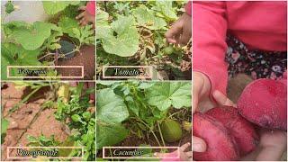 Names of a Few Plants in a Garden | Home Garden Tour