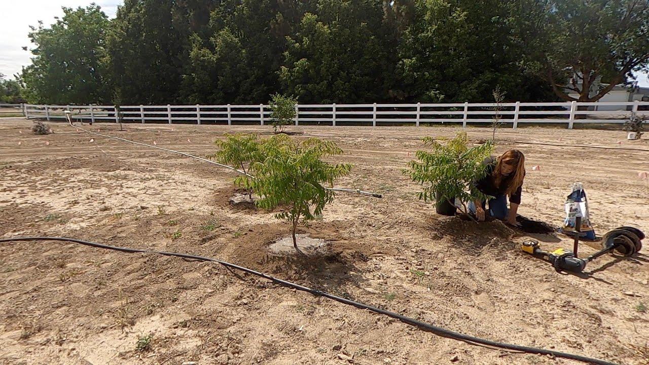 Planting Sumacs and Elderberries! 🌿 // Garden Answer