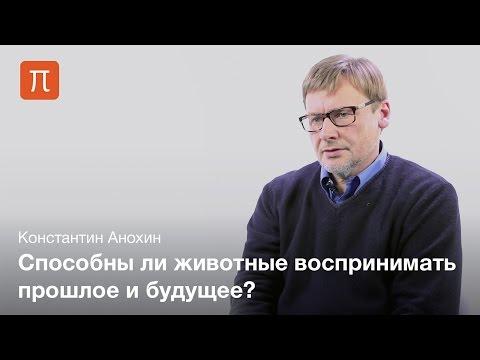 Проблема сознания у животных — Константин Анохин