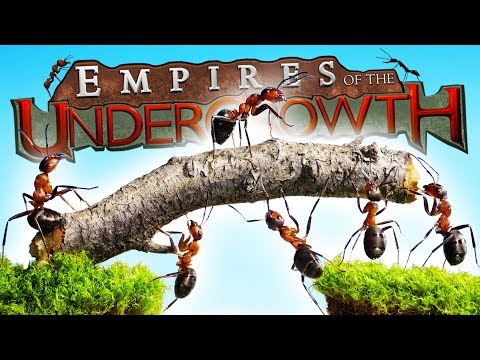 GIANT Beetles ATTACK ANT QUEEN! - Empires of the Undergrowth Gameplay