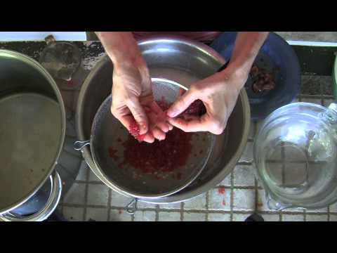 How to make red caviar youtube for How to prepare caviar