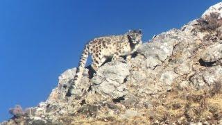 Snow Leopard expedition - Tibetan plateau - China April 2017 © Tormod Amundsen Biotope