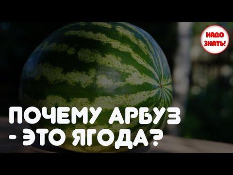 Почему арбуз это ягода?