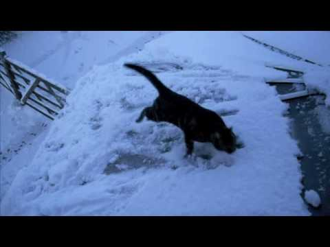 Cat + Snow = FAIL