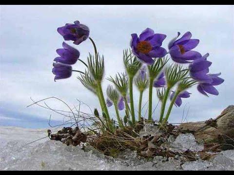 Времена года - весна. Наслаждаюсь временами года