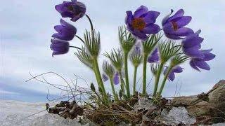Времена года - весна. Наслаждаюсь временами года(, 2015-03-17T06:15:25.000Z)