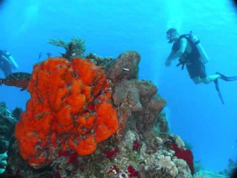 scuba-diving-lessons-chicago