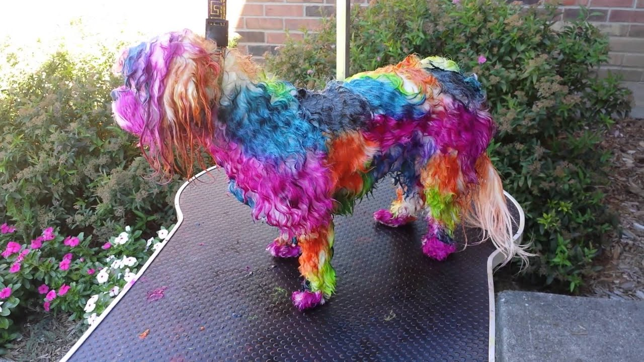 How To Dye Your Dog With Koolaid Manic Panic And Youtube