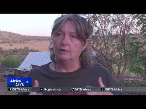 South African Animal Shelter Warns Against The Purchasing Of 'miniature' Pigs