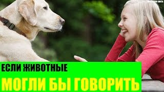 Если животные могли бы говорить