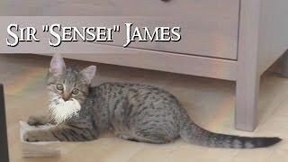 #02 SIR JAMES: Alles braucht seine Zeit