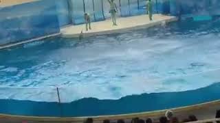 Amazing Dalphin Dance @Japan