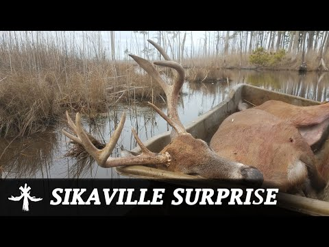 MD SIKA DEER HUNTING - SURPRISED BY A MARSH WHITETAIL BUCK