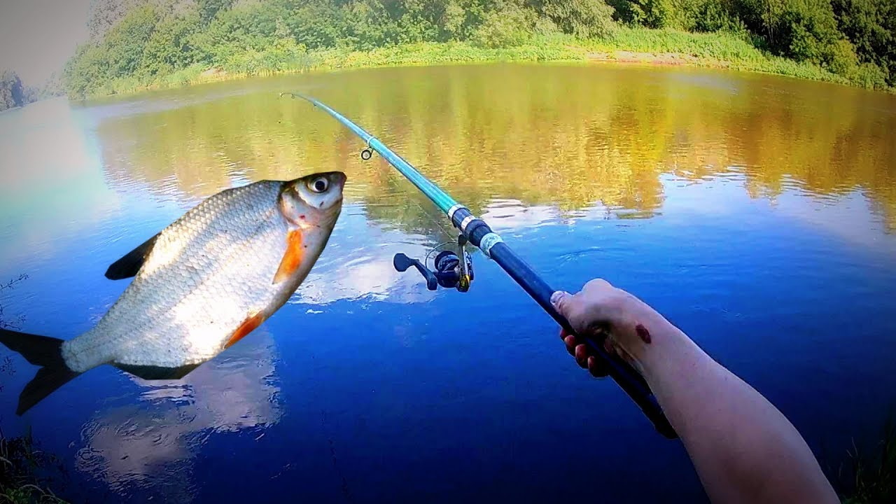 просмотр видео о рыбалке летом
