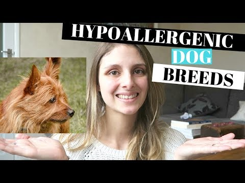 BEST HYPOALLERGENIC DOG BREEDS - 5 BREEDS THAT ARE GREAT FOR FAMILIES