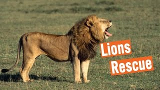 Discovery Education Kids - Lions Rescue 2016