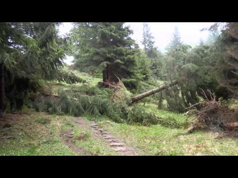 Kalamita 2014 v oblasti Bobroveckej doliny