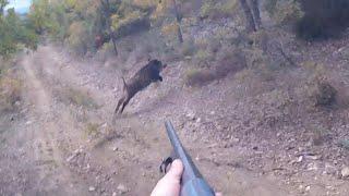 Yine adrenalin dolu ,bol köpek sesli Omak yaban domuzu avımız / Wildboar hunting in Turkey